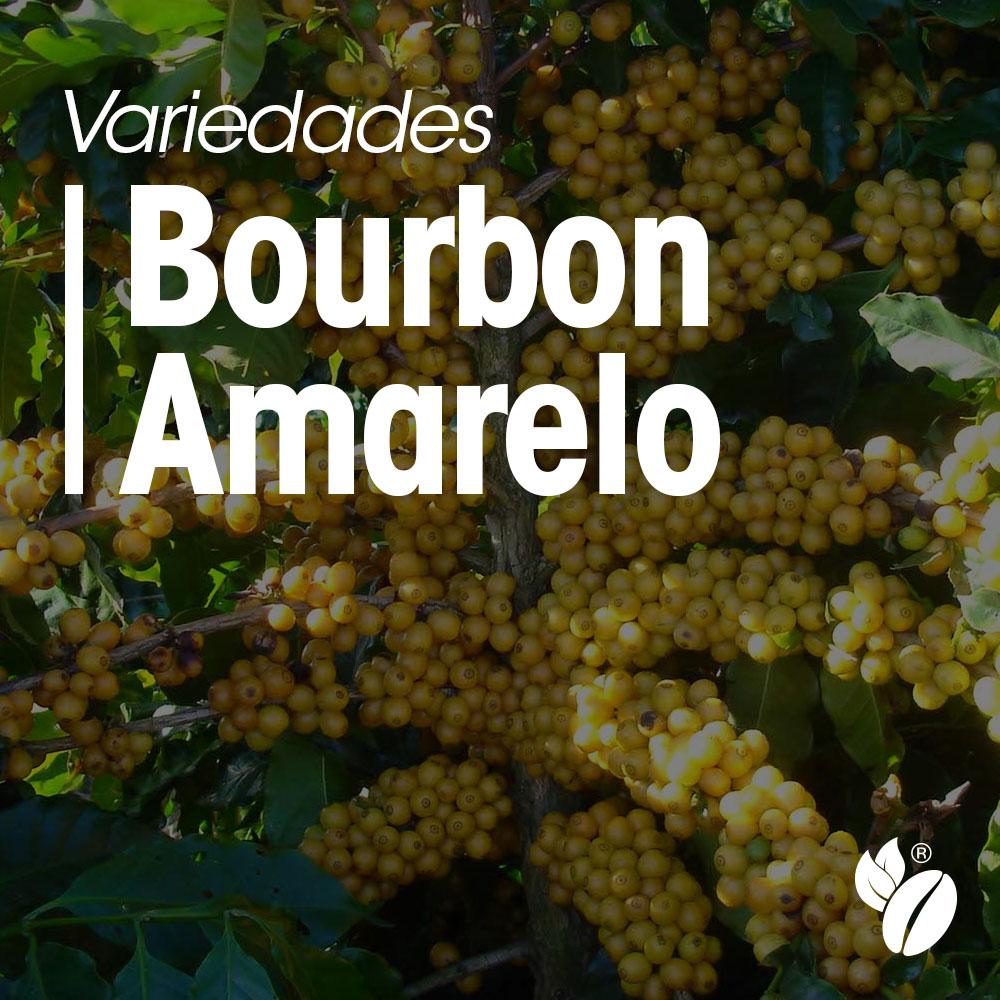 Variedades Bourbon Amarelo