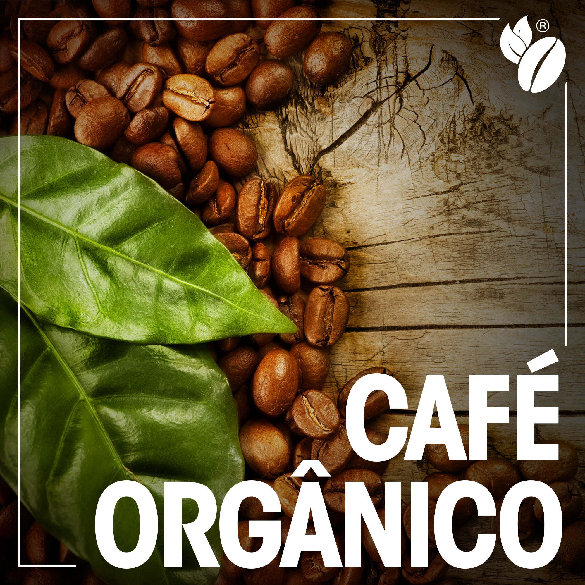 cafe organico em capsulas para nespresso